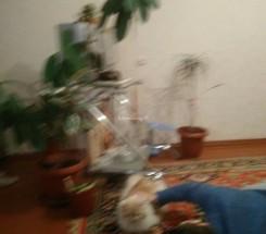 3-комнатная квартира (Буялык/Лядова) - улица Буялык/Лядова за 368 400 грн.